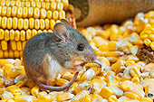 ROD 06 TK0004 01