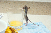 ROD 06 TK0006 01