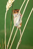 ROD 06 WF0001 01