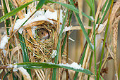 ROD 06 KH0001 01