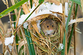 ROD 06 KH0002 01
