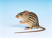 ROD 06 KH0008 01