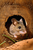 ROD 06 TK0001 01