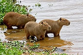 ROD 08 GL0001 01