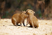 ROD 08 MC0005 01