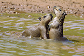 ROD 08 MC0008 01