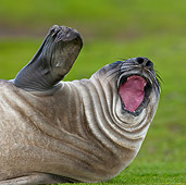 SEA 01 KH0004 01