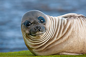 SEA 01 KH0006 01