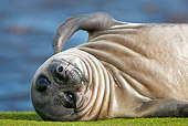 SEA 01 KH0007 01