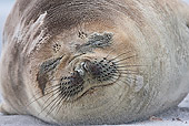 SEA 01 KH0012 01