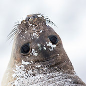 SEA 01 KH0014 01