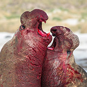 SEA 01 KH0028 01