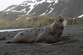 SEA 01 MC0008 01