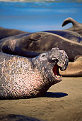 SEA 01 JM0002 01