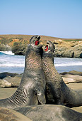 SEA 01 JM0003 01