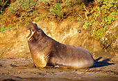 SEA 01 TL0001 01