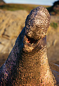 SEA 01 TL0002 01