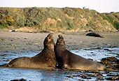 SEA 01 TL0004 01