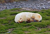 SEA 02 WF0001 01