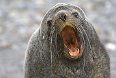 SEA 02 WF0002 01