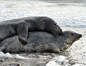SEA 04 AC0012 01