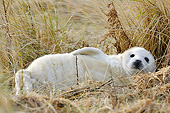 SEA 04 AC0015 01