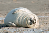 SEA 04 AC0018 01
