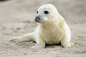 SEA 04 AC0021 01