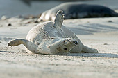 SEA 04 AC0022 01