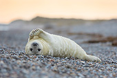SEA 04 AC0023 01