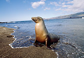 SEA 04 GL0002 01