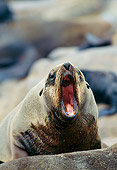 SEA 04 GL0005 01