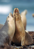 SEA 04 GL0006 01