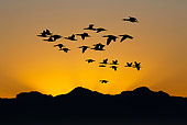 SEA 04 GL0007 01