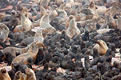 SEA 04 JE0009 01