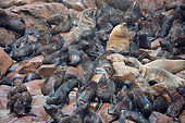 SEA 04 JE0010 01
