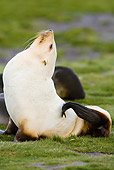 SEA 04 MC0002 01