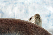 SEA 04 MC0003 01