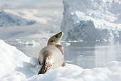SEA 04 MC0006 01