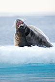 SEA 04 SK0019 01