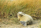 SEA 04 WF0002 01