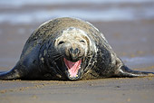 SEA 04 WF0004 01