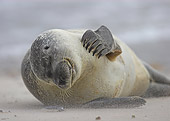 SEA 04 WF0015 01