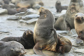 SEA 04 WF0019 01