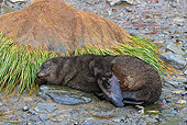 SEA 04 WF0020 01