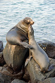 SEA 04 NE0001 01