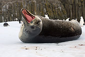SEA 04 SK0004 01