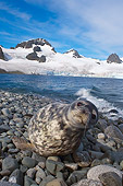 SEA 04 SK0010 01