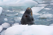 SEA 04 SK0014 01