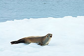 SEA 04 SK0015 01
